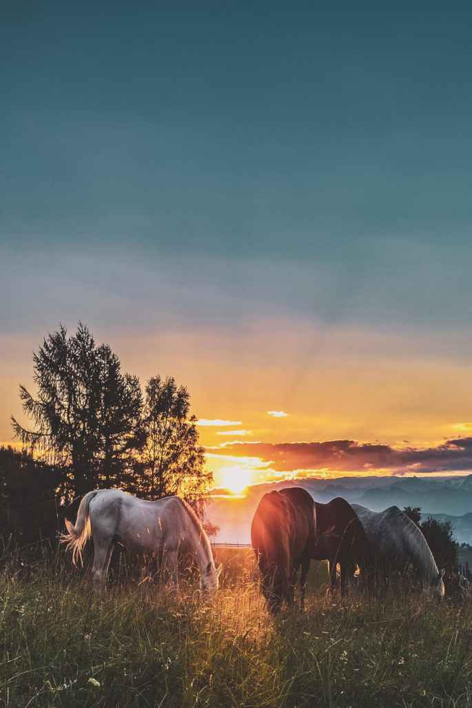 four assorted color horse on grass fields near tall trees during sunset